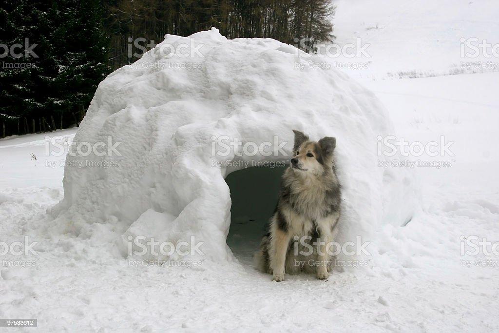 Igloo watchdog royalty-free stock photo