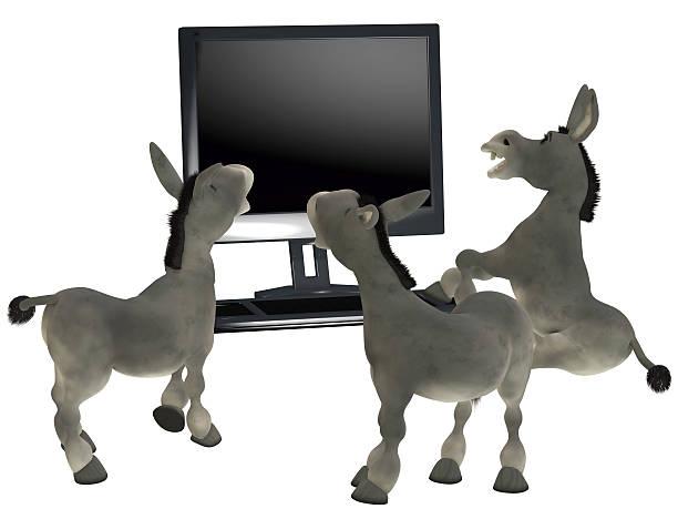 ignorant donkeys stock photo