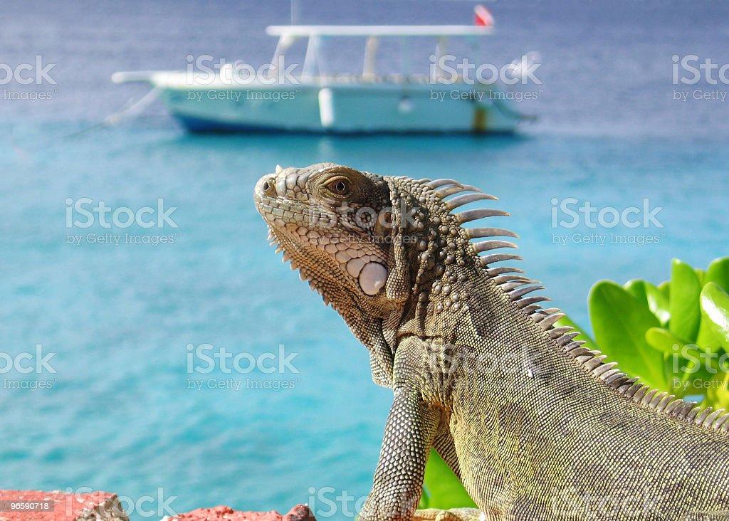 Iguana by the Sea - Royalty-free Aquatic Organism Stock Photo