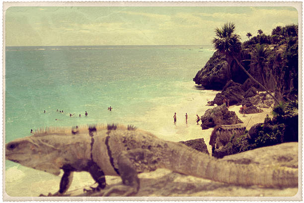iguana crossing: tulum, mexico - vintage postcard - rocky coastline stock pictures, royalty-free photos & images
