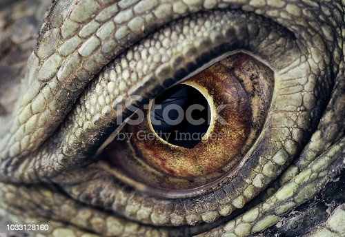 Macro photo of a green iguana