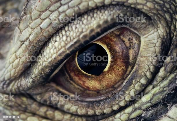 Iguana eye closeup picture id1033128160?b=1&k=6&m=1033128160&s=612x612&h=lmkh3qx4abs5h4otcslzoc9bfhnkjgdqxnjzthsfojm=