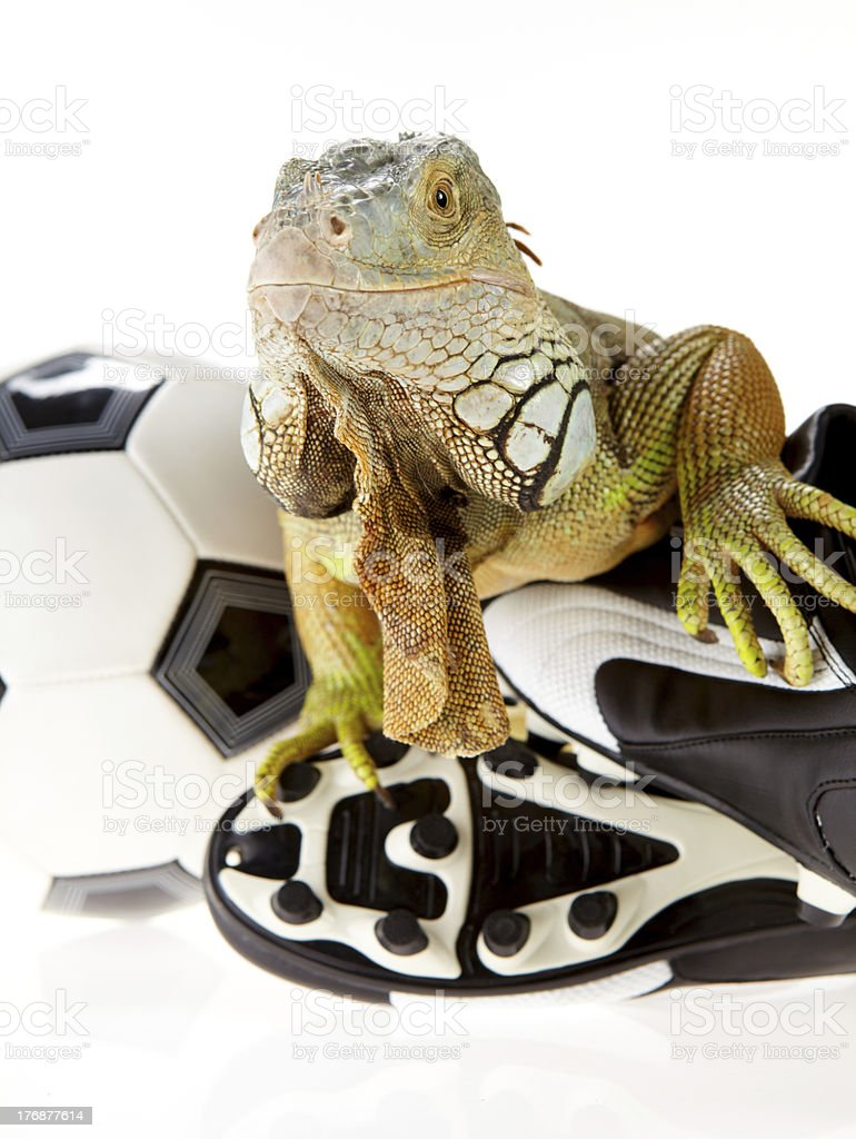 Iguana in football concept royalty-free stock photo