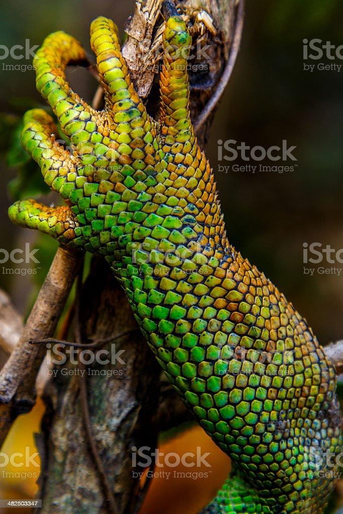 Iguana leg stock photo