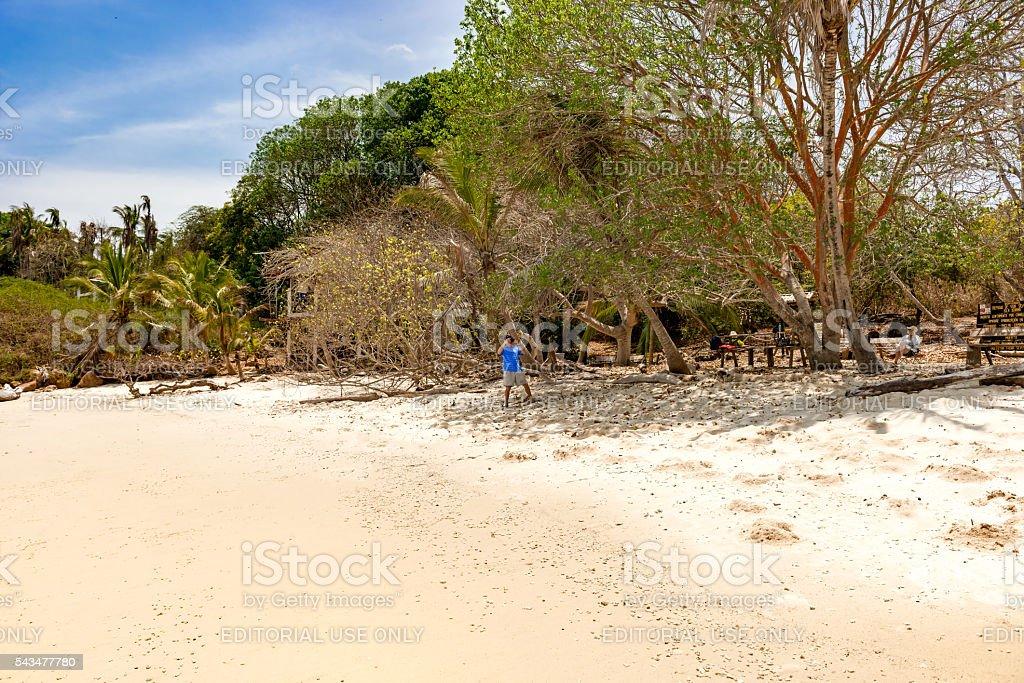 Iguana sland near Pedasi in Panama' stock photo