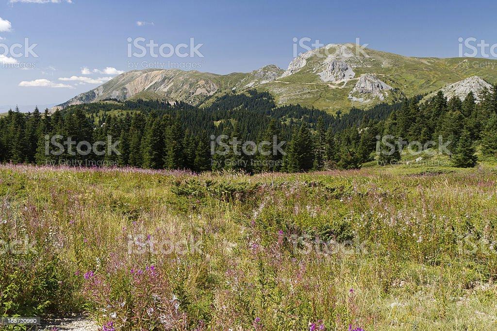 Ilgaz Mountains royalty-free stock photo