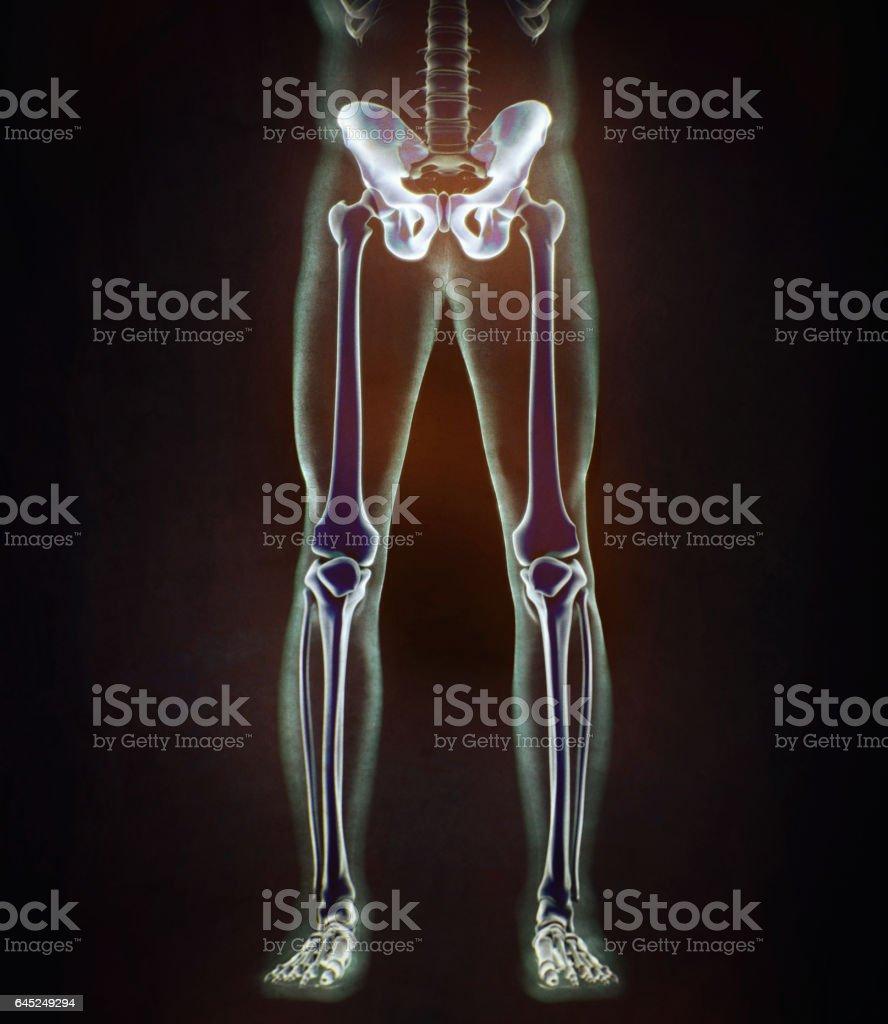 Fotografía de Hueso Ilion Pelvis De Hueso De La Cadera Anatomía ...