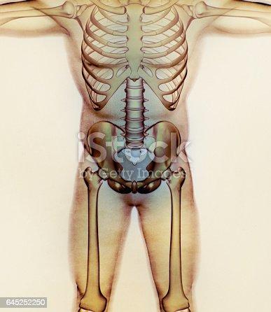 Ilium Bone Hip Bone Pelvis Human Anatomy Skeletal Structure Xray ...