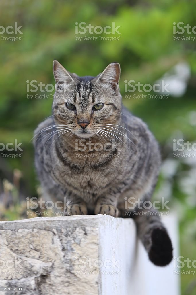 Ill Cat stock photo