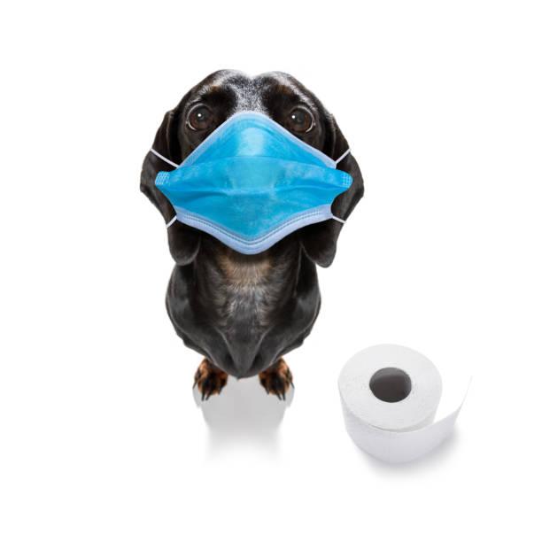 kranker Hund mit Krankheit und Papierrollen – Foto