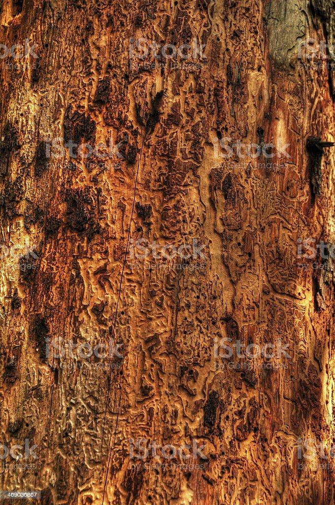 ill tree close-up royalty-free stock photo