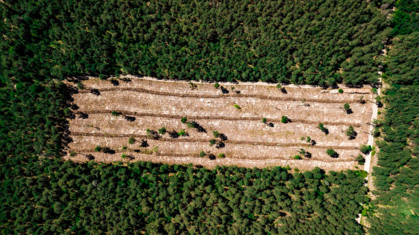 illegal cutting of forest, empty forest glade aerial photography with drone illegal cutting of forest, empty forest glade aerial photography with drone deforestation stock pictures, royalty-free photos & images