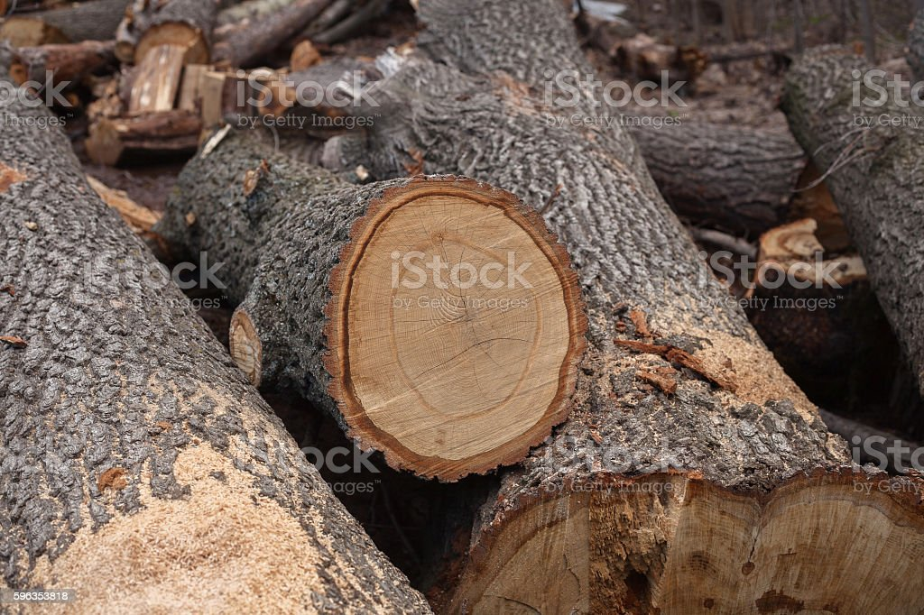 illegal felling of trees in the forest. ecology concept. royalty-free stock photo