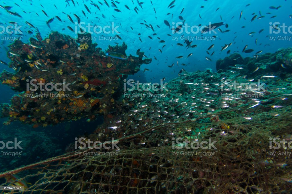Illegal Fishing in the marine national park royalty-free stock photo