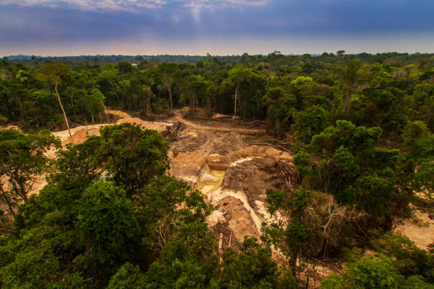 Illegal mining causes deforestation and river pollution in the Amazon rainforest near Menkragnoti Indigenous Land. - Pará, Brazil Illegal mining causes deforestation and river pollution in the Amazon rainforest near Menkragnoti Indigenous Land. - Pará, Brazil deforestation stock pictures, royalty-free photos & images
