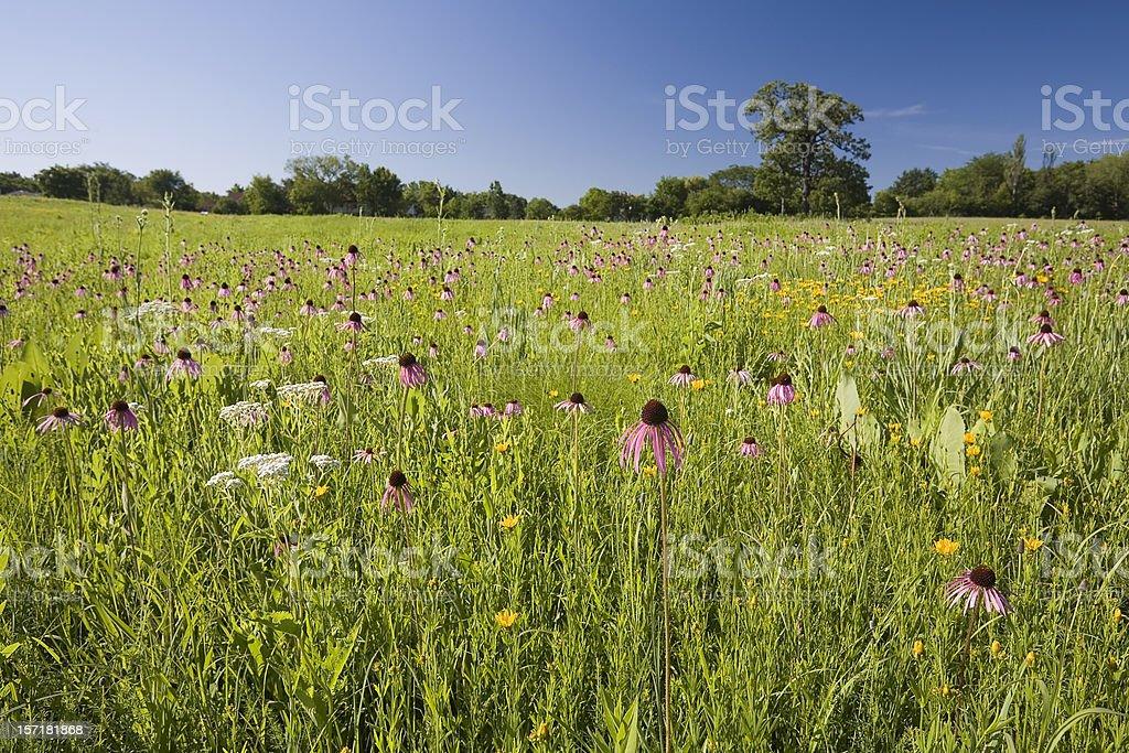 Illinois Prairie royalty-free stock photo