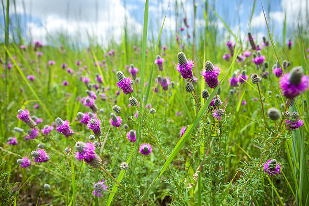 Illinois Wildflowers stock photo