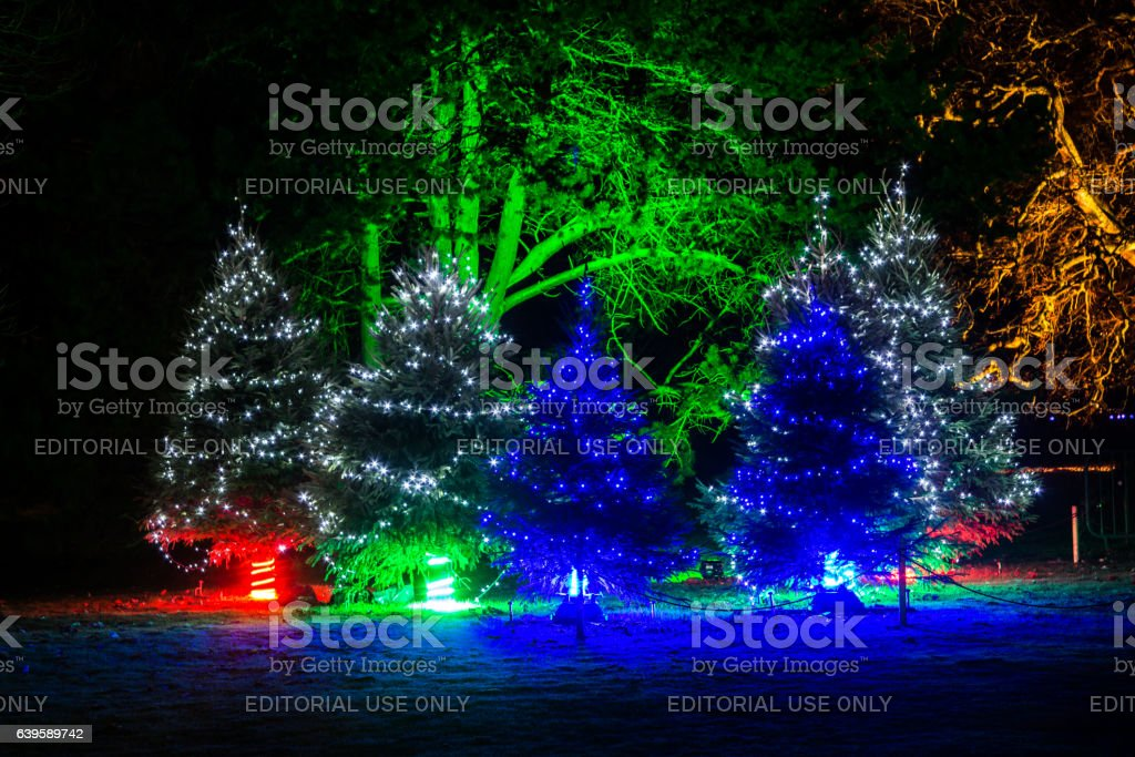 Illuminated Christmas trees in the dark stock photo