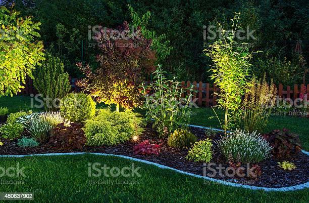 Photo of Illuminated Garden