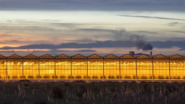 Illuminated industrial greenhouse stock photo