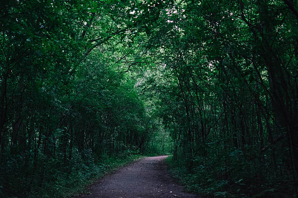 illuminated path in the forest