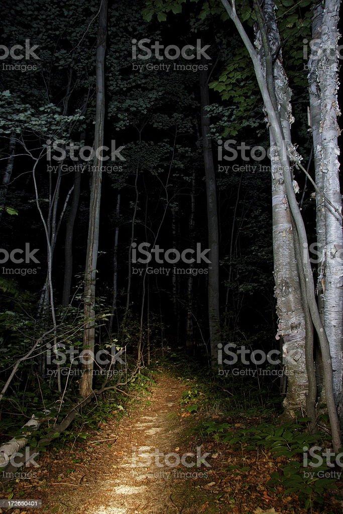 Illuminated Path Through Dark Woods royalty-free stock photo