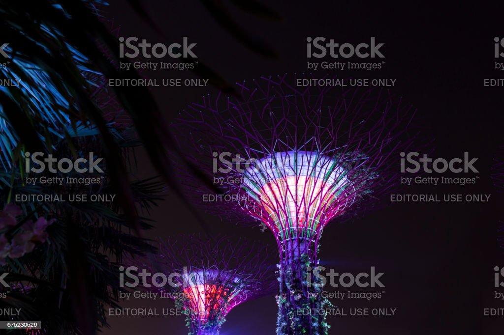 Illuminated Skytree, Gardens by the Bay royalty-free stock photo