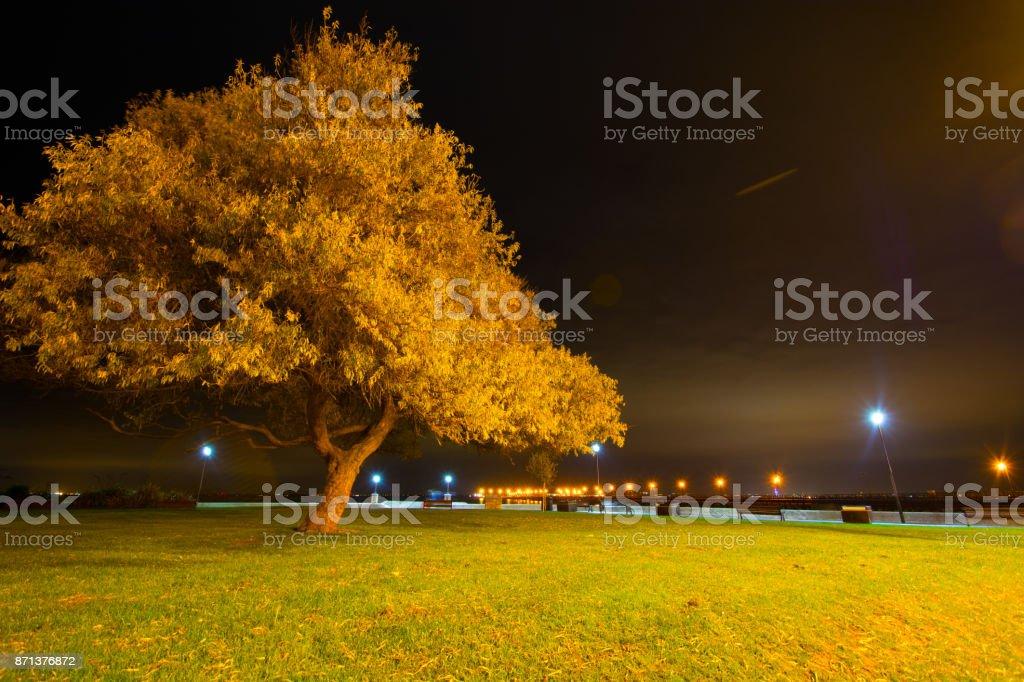 Illuminated Tree and City Skyline stock photo
