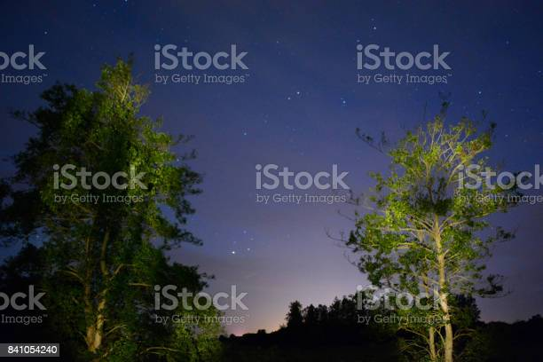 Photo of Illuminated Trees and Night Sky