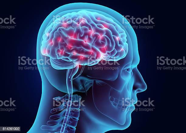 Illustration brain nervous system active picture id514261002?b=1&k=6&m=514261002&s=612x612&h=fe icqr3vow06mrnajllez6rn3wkdh o1pwc9ann2ik=