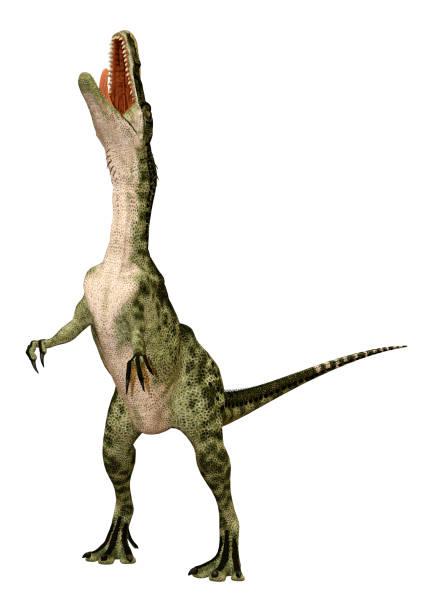 3d-illustration dinosaurier monolophosaurus auf weiß - dinosaurier illustration stock-fotos und bilder