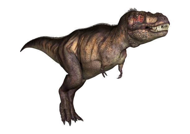 3d-illustration dinosaurier tyrannosaurus auf weiß - dinosaurier illustration stock-fotos und bilder