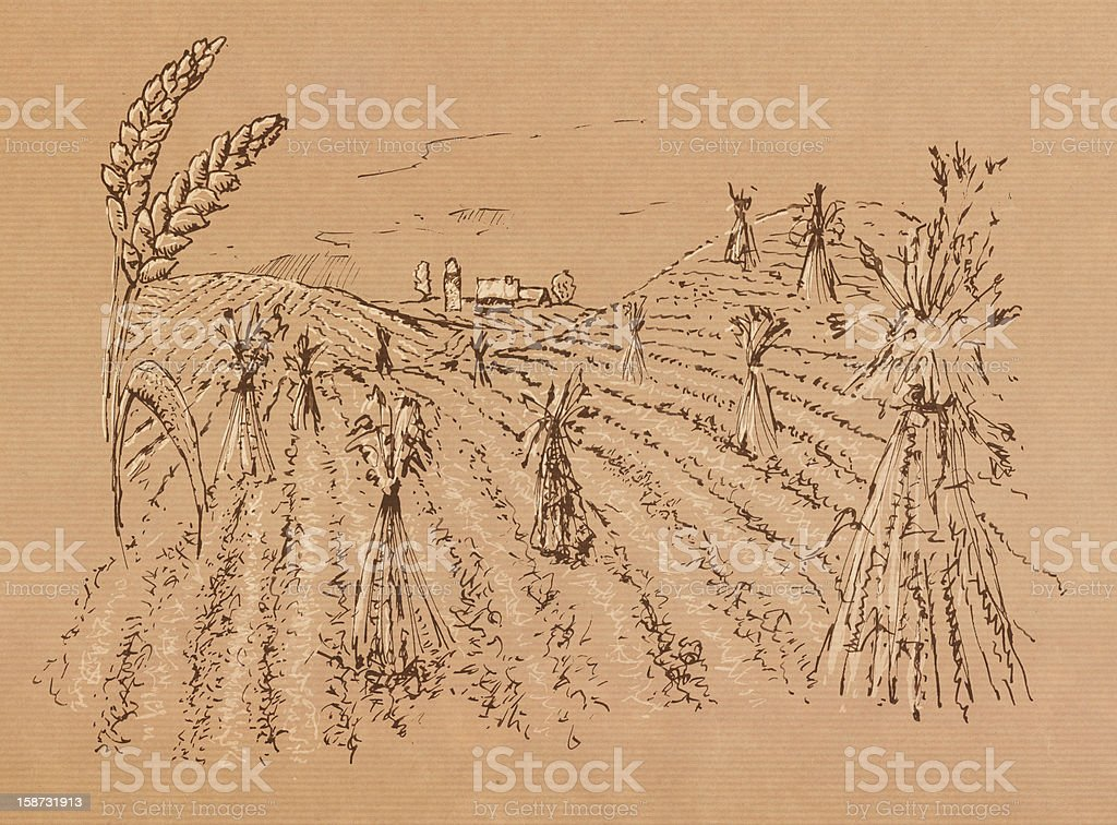 Illustration eines Kornfeldes royalty-free stock photo