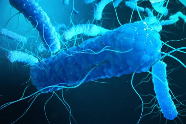 3D illustration Enterobacterias. Gram negativas Proteobacteria, bacteria such as salmonella, escherichia coli, yersinia pestis, klebsiella stock photo