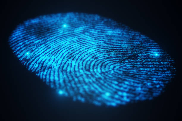 3d illustration fingerprint scan provides security access with biometrics identification. concept fingerprint protection. - fingerprint stock photos and pictures
