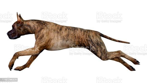 Illustration great dane dog on white picture id1192296325?b=1&k=6&m=1192296325&s=612x612&h=cddwo9uz ackxt8z xvtn6f5iopzw810rkhulr343cm=