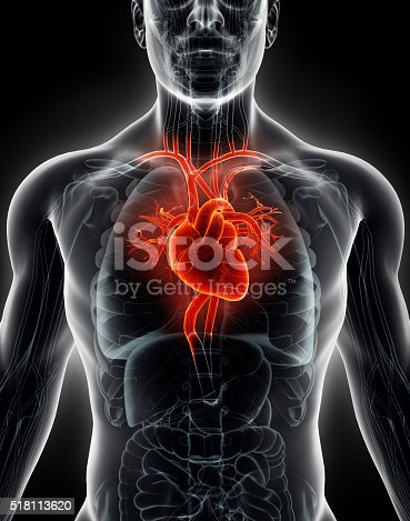 istock 3D illustration Human Internal Organic - Human Heart. 518113620
