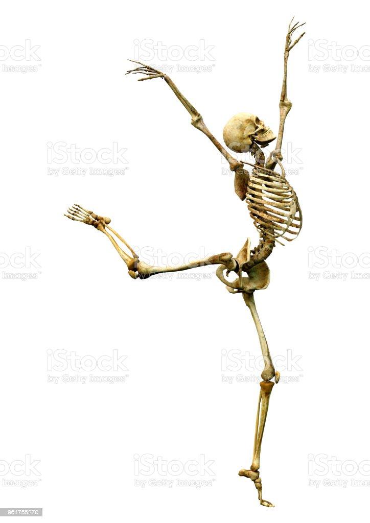 3D illustration human skeleton on white royalty-free stock photo