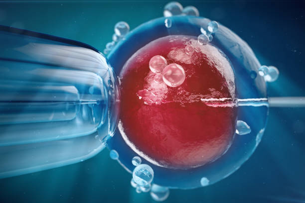 3D Illustration In vitro fertilisation , Injecting sperm into egg cell , Assisted reproductive treatment. stock photo