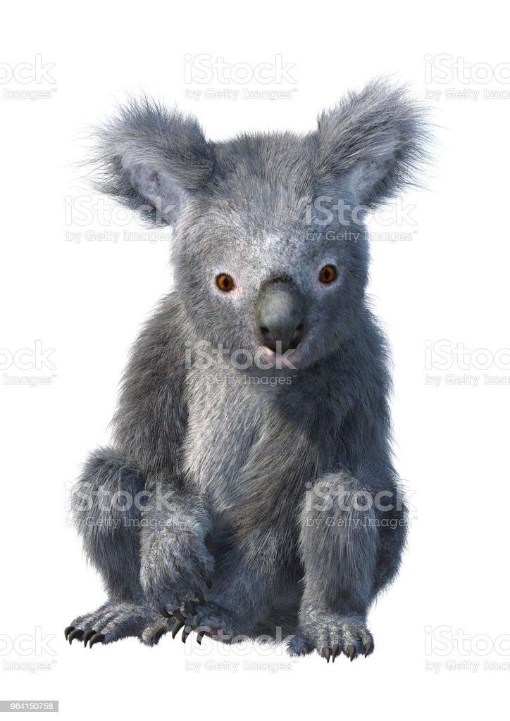 3d Illustration Koala Bear On White Stock Photo Download Image Now Istock