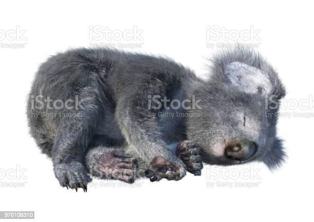 Illustration koala bear on white picture id970106310?b=1&k=6&m=970106310&s=612x612&h=jsxybdwg2ujlpvyumjixgtncz1vjkdow lc84nrpkye=