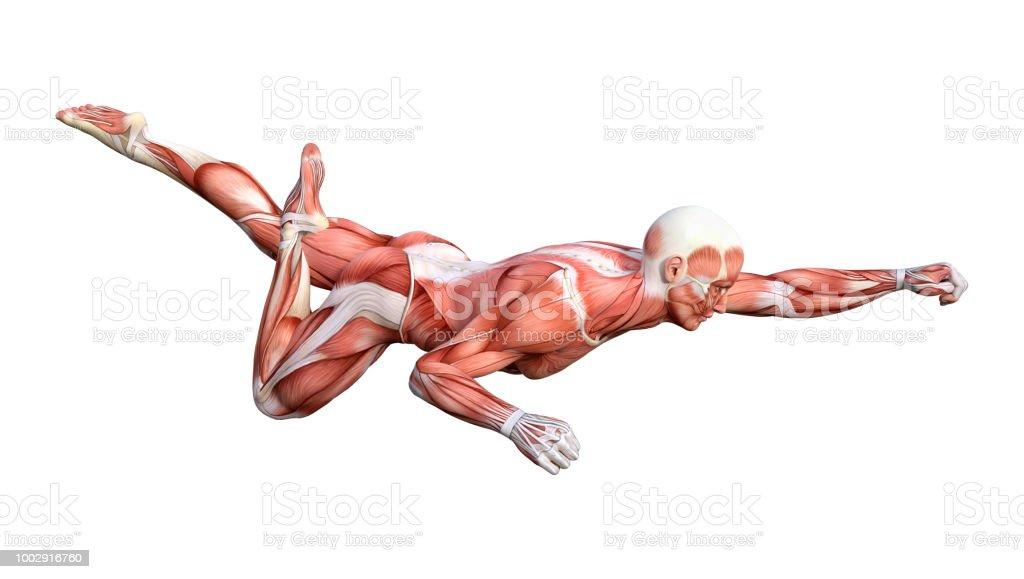 3d Illustration Male Anatomy Figure On White Stock Photo & More ...