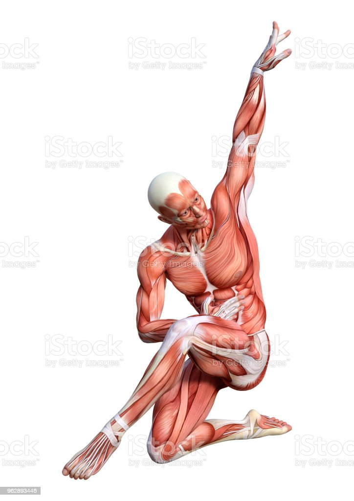 Fotografía de Ilustración 3d Anatomía Masculina Figura En Blanco y ...