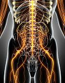 istock 3D illustration male nervous system. 538871738
