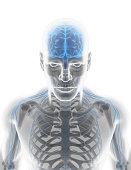 istock 3D illustration male nervous system. 540376920