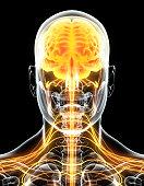 istock 3D illustration male nervous system. 545640056