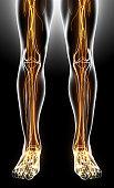 istock 3D illustration male nervous system. 545640250