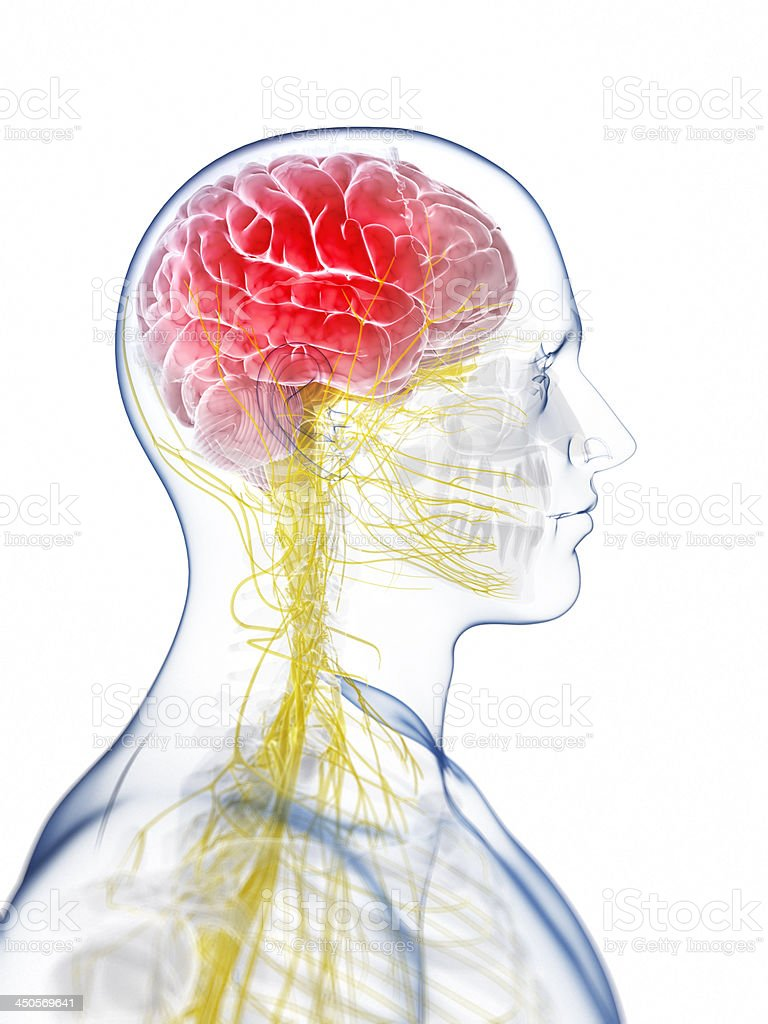 Illustration of a 3D human body representing a headache royalty-free stock photo