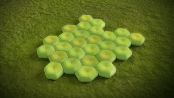 3D illustration of a acinetobacter baumannii bacteria stock photo
