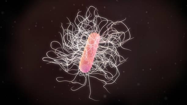 3D illustration of a clostridium difficile bacteria stock photo